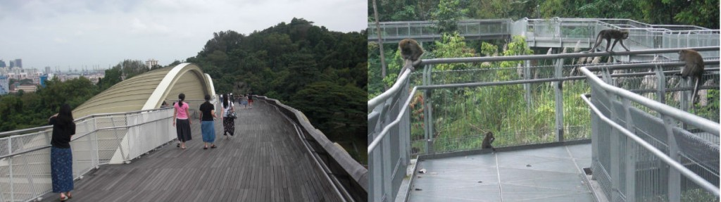 Henderson Waves (Left) and Monkeys Found On Forest Walks (Right)